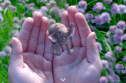 Tiny augmented reality elephant on the Magic Leap homepage.