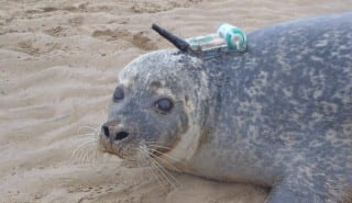 vodafone-smru-seal-with-smart-tag