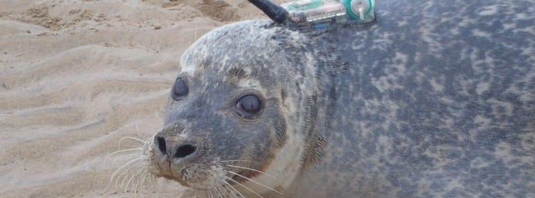 vodafone-smru-seal-with-smart-tag