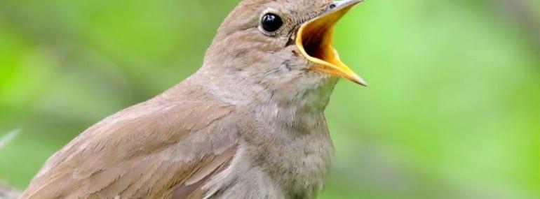 bird tweet twitter