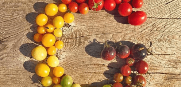 Google Fruit