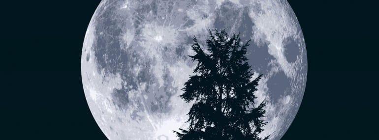 lune - clair de lune - paysage - arbre - sapin - fond - ciel - rve - nuit - nocturne - hibou