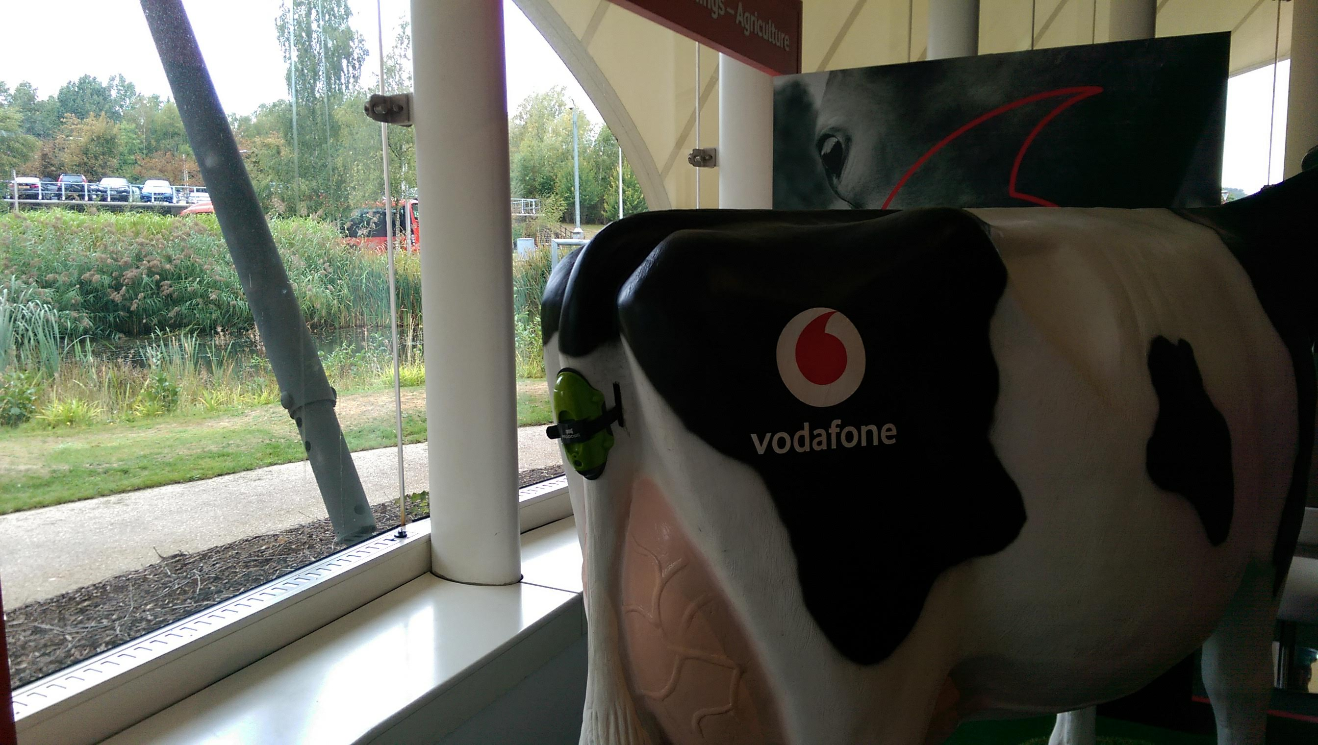 Vodafone Cow